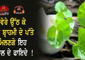 brahmi leaves benefits